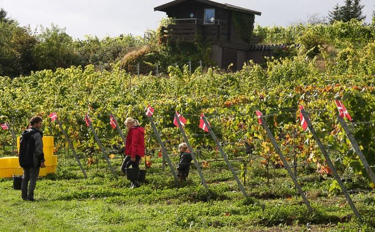 Høst på Skærsøgaard